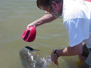 Fish Story2